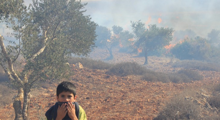 Israeli settlers burn olive fields and attack British activist near Nablus