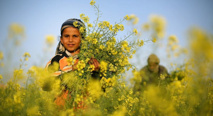 Gaza Flowers Barred from Export to Europe