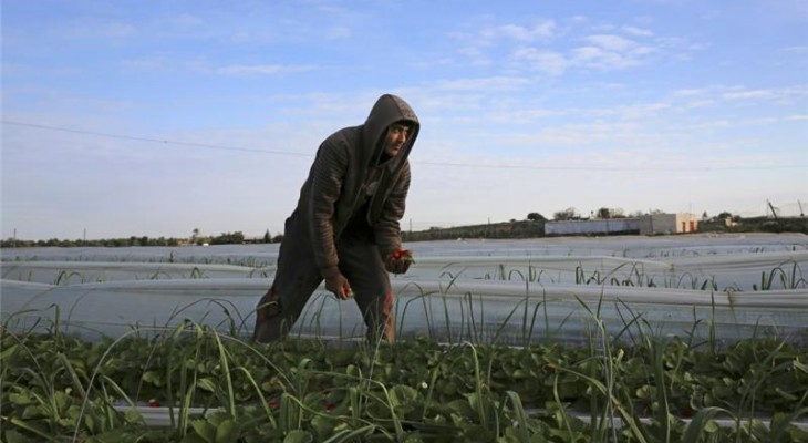 Israel spraying toxins over Palestinian crops in Gaza