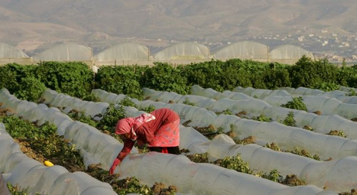 The Palestinian farmers battling border restrictions and lack of water