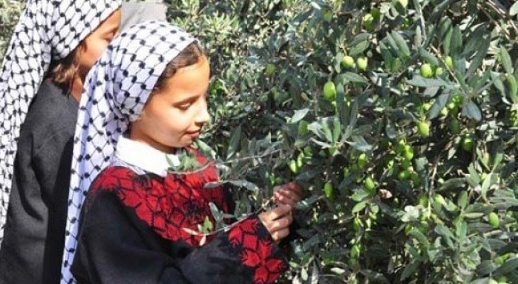 British Consulate General launches initiative to support Palestinian olive harvest