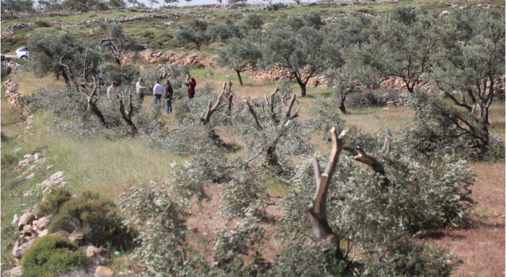 Rights group: Israel Police failing to probe settler attacks on Palestinians