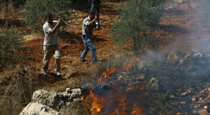 Settlers torch Palestinian land planted with citrus trees