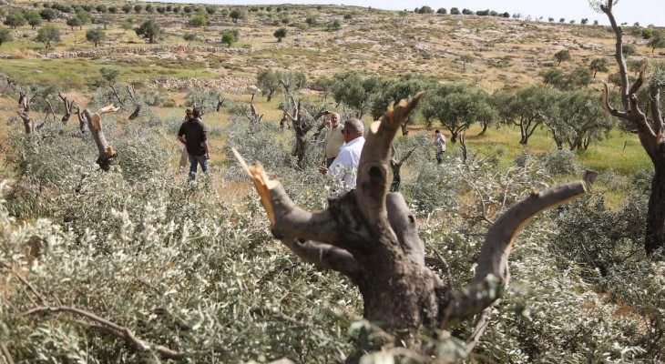 War on nature: How Zionist colonialism has destroyed the environment in Palestine