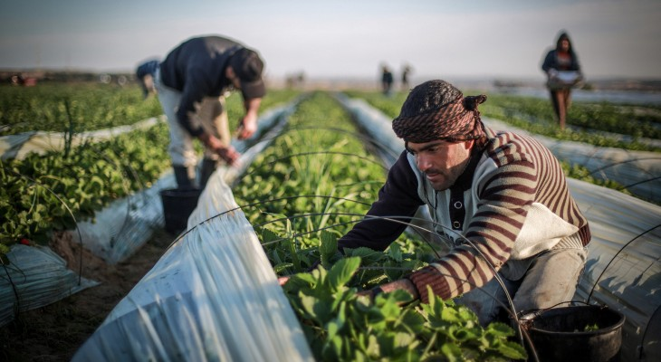 How an Israeli smear campaign is ripping away funds from Palestinian farmers