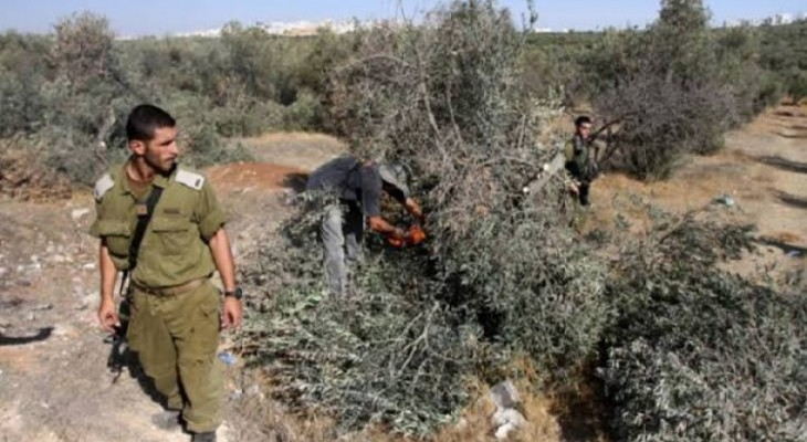 UAWC: 'Israel' uprooted 130 trees in February only